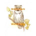 Owl  - XBAN471  -  PRINT