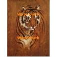 Tiger  - #XXBAN531  -  PRINT 8x10