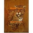 Leopard  - #XXBAN532  -  PRINT 8x10
