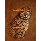 Cheetah  - #XBAN557  -  PRINT