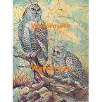 Snowy Owls  - #XBAN619  -  PRINT