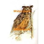 Owl  - #XBAN711  -  PRINT