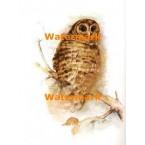 Owl  - #XBAN712  -  PRINT