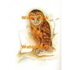 Owl  - XBAN713  -  PRINT