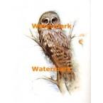 Owl  - #XBAN714  -  PRINT