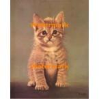Kitten  - XBAN730  -  PRINT