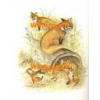 Fox Family  - #XBAN772  -  PRINT