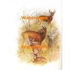 Deer Family  - #XBAN774  -  PRINT