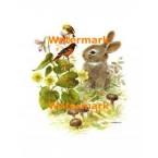 Bunny & Birds  - XBAN844  -  PRINT