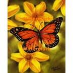 Butterfly  - #XBBF38  -  PRINT
