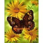 Butterfly  - XBBF39  -  PRINT