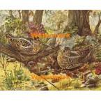 Nesting  - #XBBI-326  -  PRINT