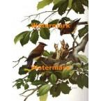 Birds  - #XBBI-619  -  PRINT