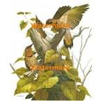 Birds  - #XBBI-664  -  PRINT