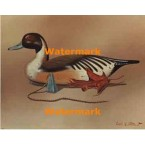 Duck Decoy  - #XBBI-750  -  PRINT