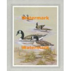 Canadian Geese  - #XBBI-869  -  PRINT
