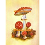 Mushrooms  - #XBFR119  -  PRINT