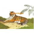 Resting Tiger  - #XRA673  -  PRINT