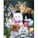 Cats  - #XBJN0102  -  PRINT
