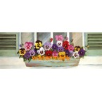 Pansies In Window Box  - #XM452  -  PRINT