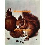The Squirrels  - #XBMC93  -  PRINT