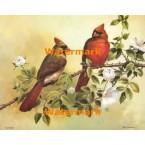 Cardinals  - #XBBI-1243  -  PRINT