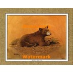 Brown Bear Cub  - #XKFL1071  -  PRINT