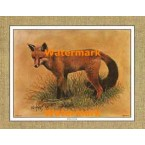 Red Fox  - #XKFL1072  -  PRINT