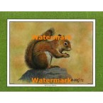 Red Squirrel  - #XKFL1078  -  PRINT