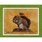 Gray Squirrel  - #XKFL1079  -  PRINT