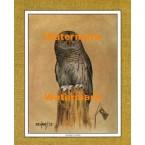 Barred Owl  - #XKFL1080  -  PRINT