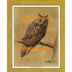 Long-Eared Owl  - #XKFL1081  -  PRINT