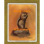 Golden-Mantled Ground Squirrel  - #XKFL1084  -  PRINT