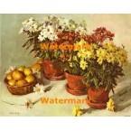 Chrysanthemums  - #XBFL1138  -  PRINT