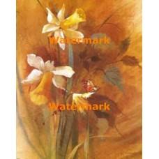 Daffodils  - XBFL1652  -  PRINT