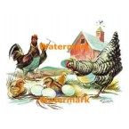 Chicken Family  - XKL1118  -  PRINT