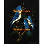 Kingfishers  - #XKLM1289  -  PRINT
