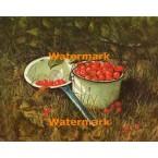 Pot of Cherries  - #XBSC1389  -  PRINT