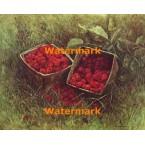 Basket of Raspberries  - #XBSC1390  -  PRINT