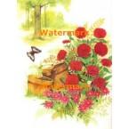 Flowers & Buckets  - XBSC1577  -  PRINT