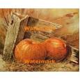 Pumpkins  - #XBSC1647  -  PRINT