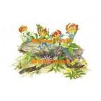 Habitat Log  - #XD10464  -  PRINT