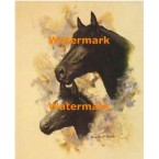 Horse Portrait III  - #XD10642  -  PRINT
