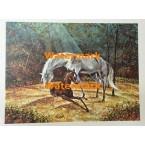 """Horses  - #XXBSP352 -  PRINT 12x16"""""""