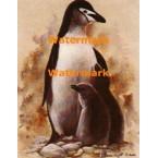 Penguins  - #XD50062  -  PRINT