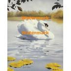 Swan Lake  - #XKH2565  -  PRINT