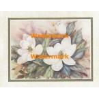 Magnolias  - #XKVH1913  -  PRINT