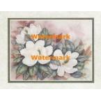 Magnolias  - #XKVH1914  -  PRINT