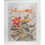 Hardy Lilies  - #XKVH3846  -  PRINT