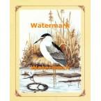 1.  Black Crowned Night Heron  - #XKFL2726  -  PRINT